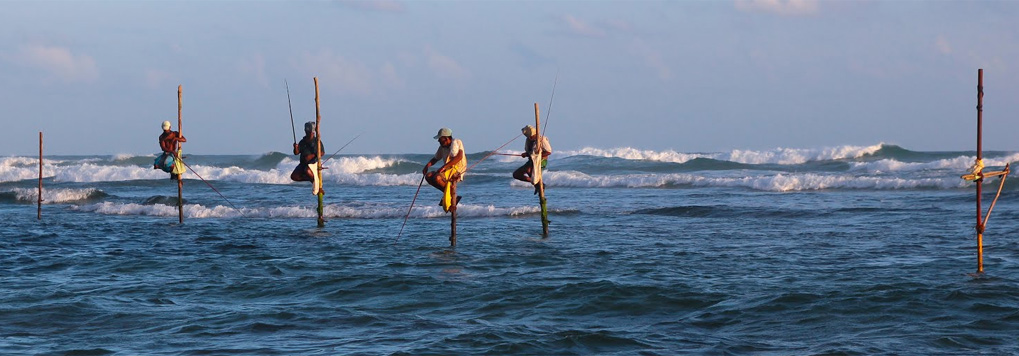 Stilt Fishing wonder full seen in South Coast. You can visit with Dee Lanka Tours